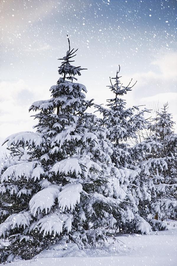 Northumberland, England Snow-covered Photograph
