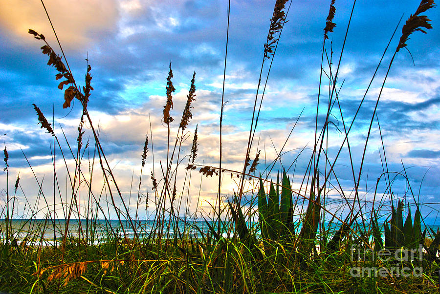 November Day At The Beach In Florida Photograph  - November Day At The Beach In Florida Fine Art Print