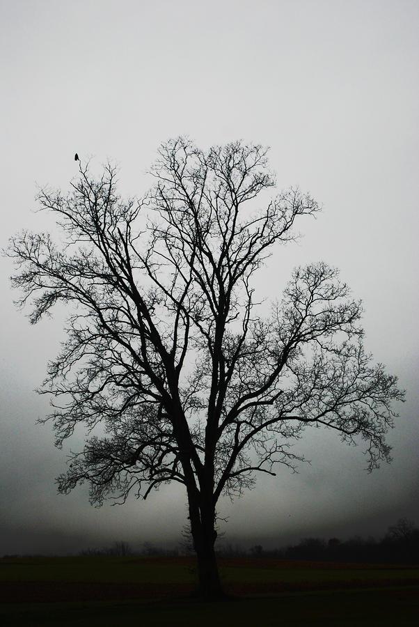 November Tree In Fog Photograph