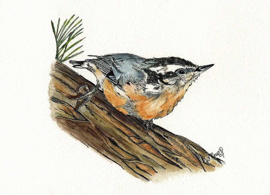 Nuthatch Painting