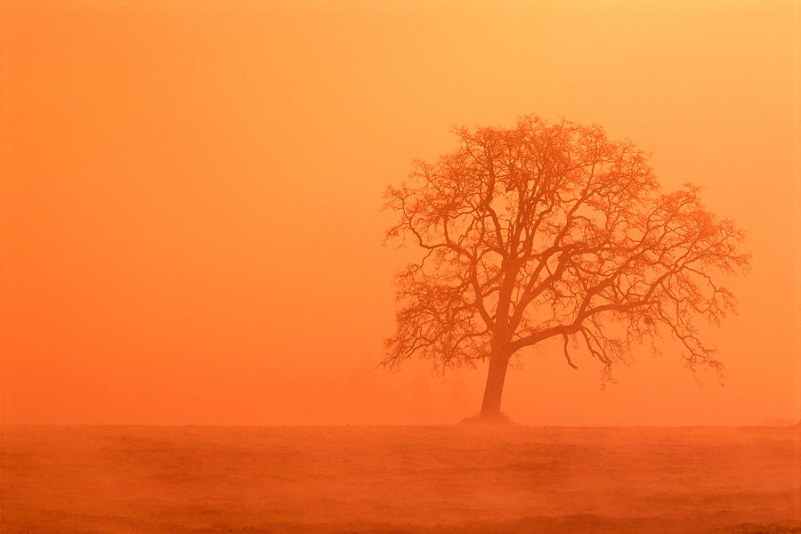 Oak At Sunrise Photograph