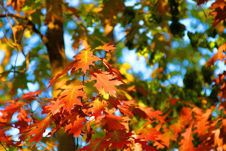 Oak Leaf Bouquet Photograph