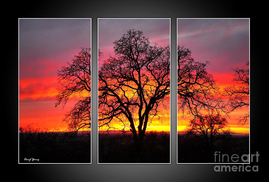 Oak Silhouette Tryptych 1 Photograph