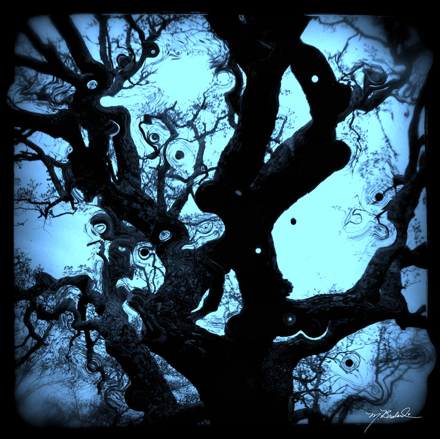 Oak Tree Dream Shot Photograph  - Oak Tree Dream Shot Fine Art Print