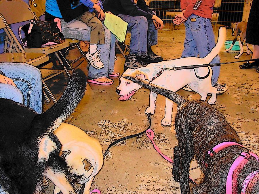Dogs Digital Art - Obedience School by Wide Awake Arts