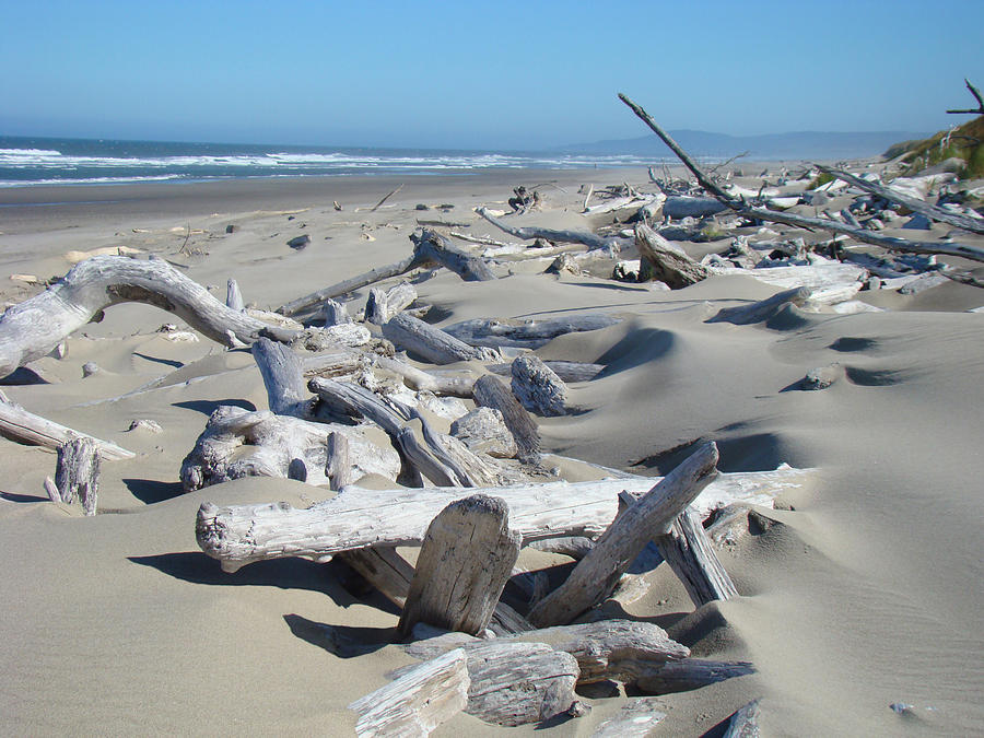 Ocean Coastal Art Prints Driftwood Beach Photograph