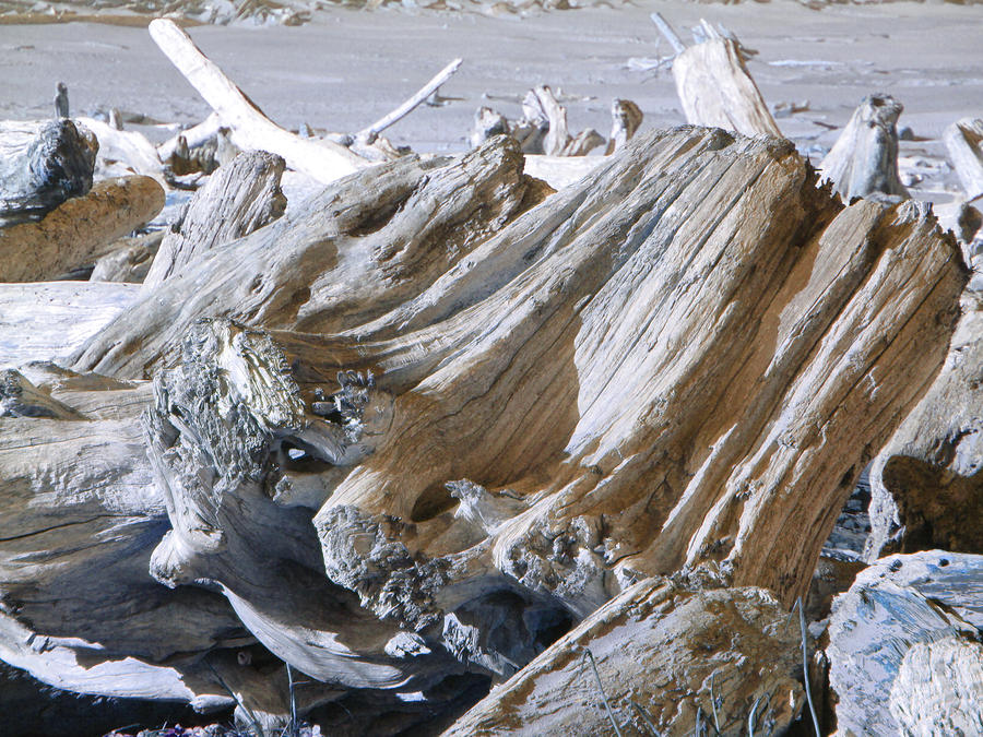 Ocean Driftwood Landscape Art Prints Coastal Views Photograph