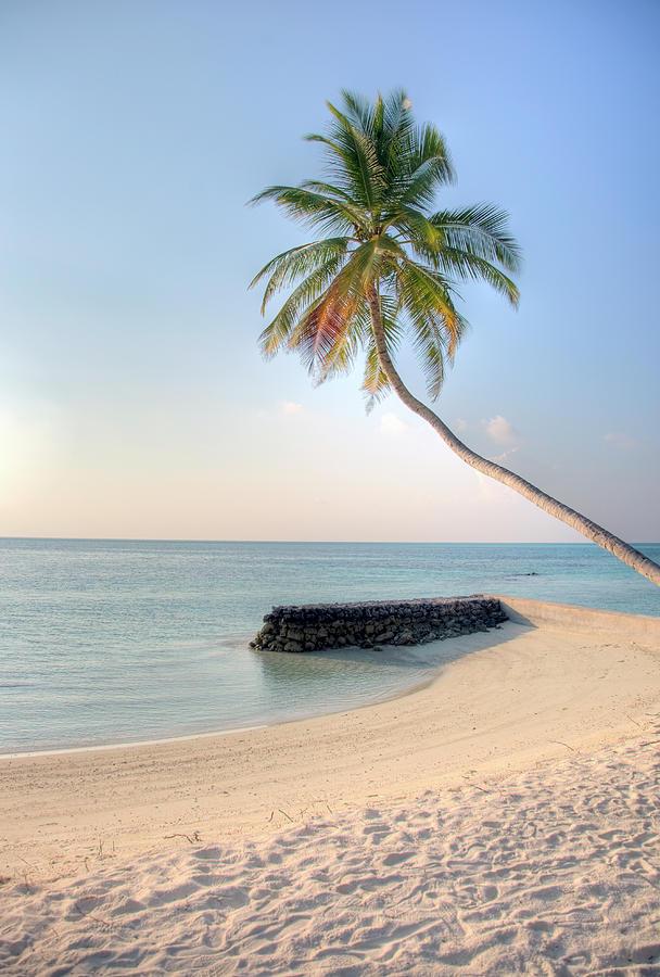 Ocean Palm Photograph
