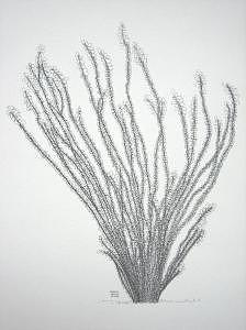 ocotillo by joanie arvin