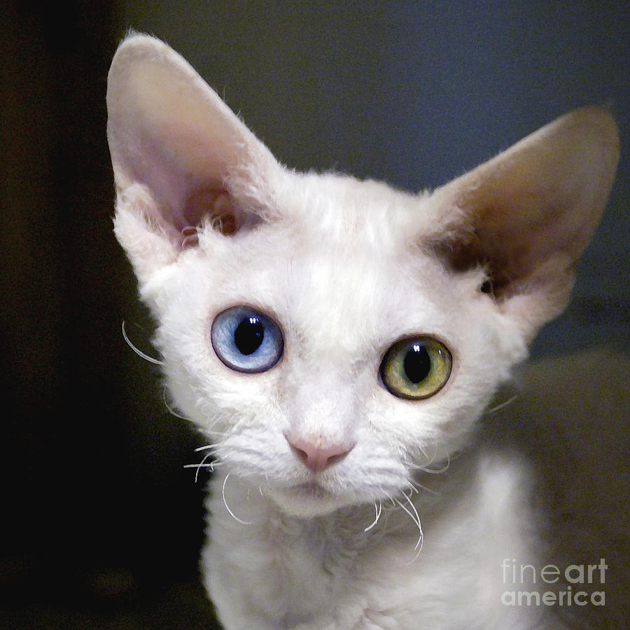 Heterochromia Cat Names
