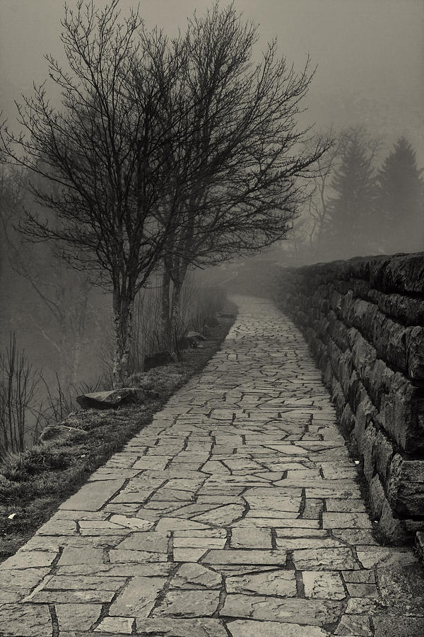 Off Into The Fog Photograph