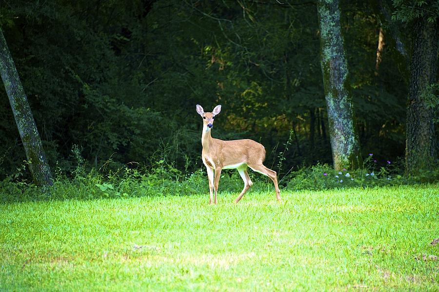 Oh Deer Photograph  - Oh Deer Fine Art Print