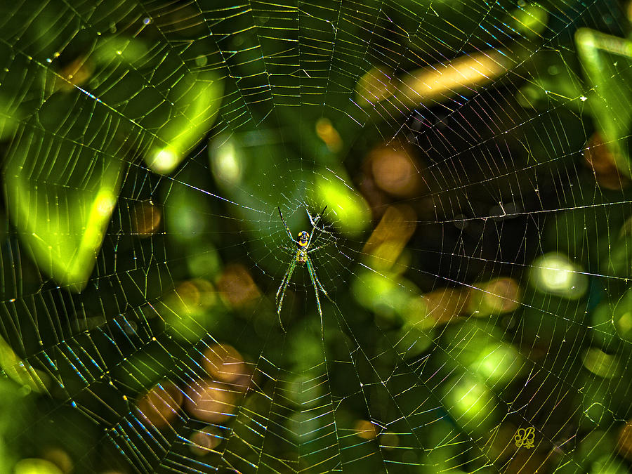 Web Photograph - Oh The Web We Weave by Barbara Middleton