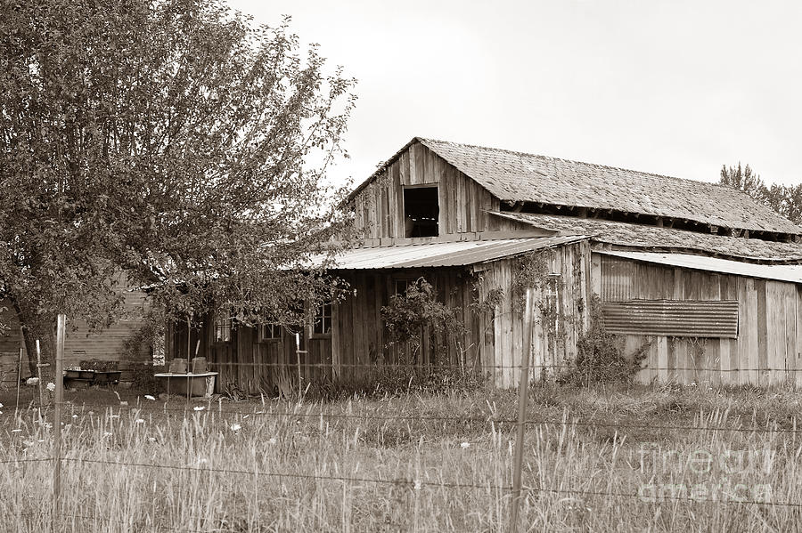 Bw Photograph - Old Barn In Sepia  by Connie Fox