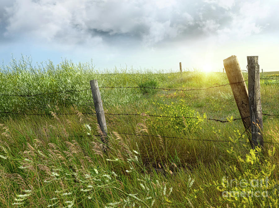 Old Country Fence On The Prairies Photograph  - Old Country Fence On The Prairies Fine Art Print