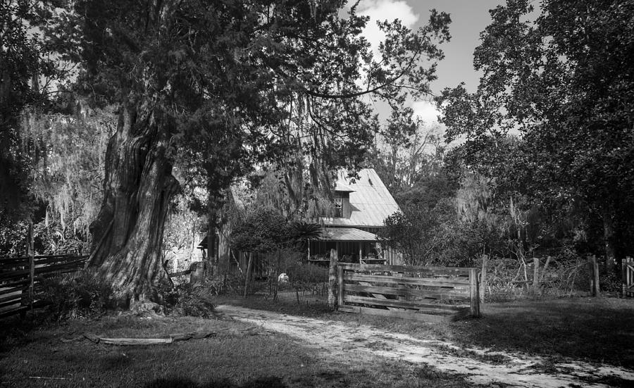 Old Florida Homestead Photograph  - Old Florida Homestead Fine Art Print