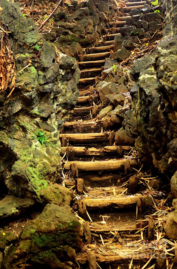 Old Forest Steps Photograph  - Old Forest Steps Fine Art Print