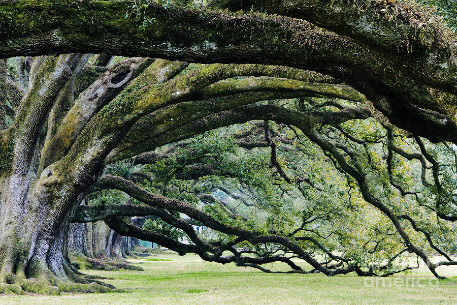 Ancient Photograph - Old Growth Trees by Jeremy Woodhouse