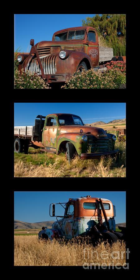Old Guys Trio 4 Photograph