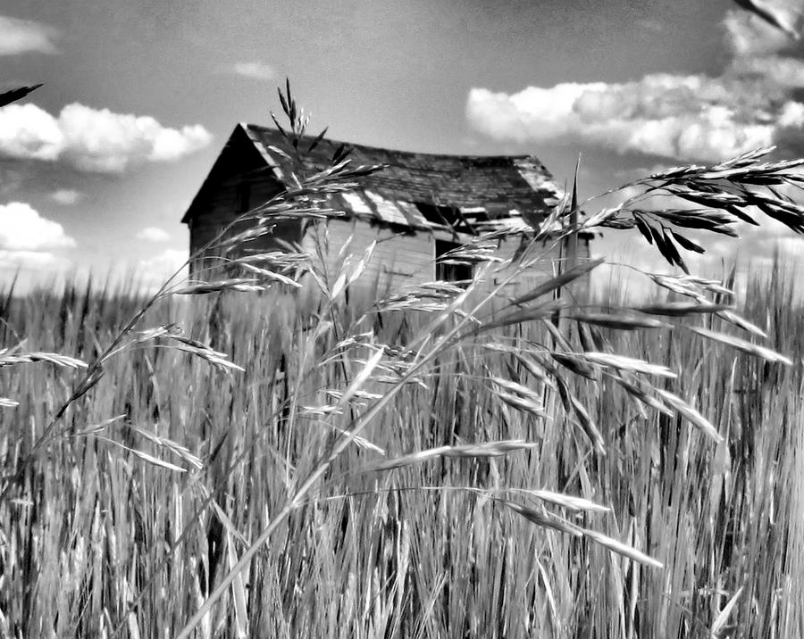 Old Shack On The Prairie In Black And White Photograph