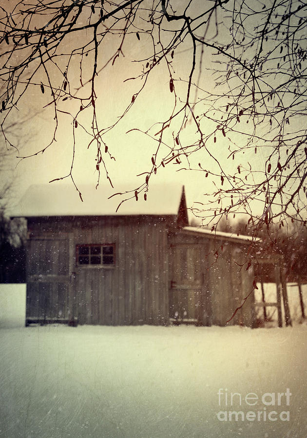 Old Shed In Wintertime Photograph