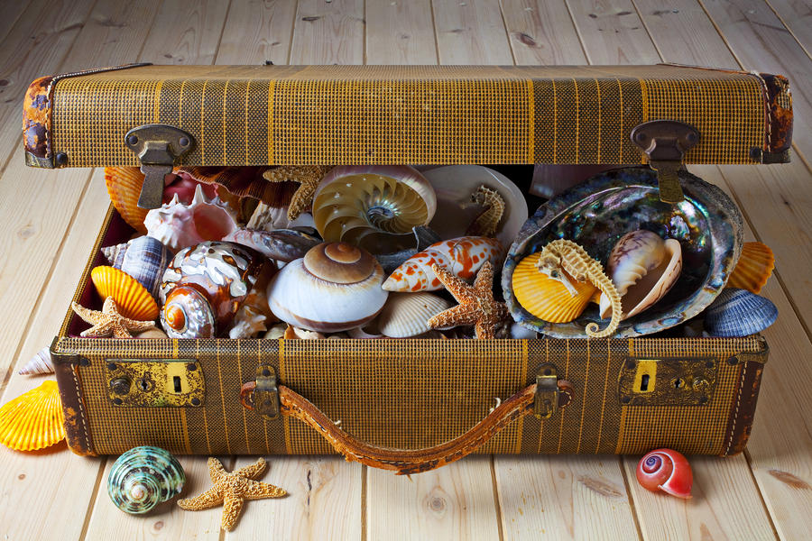 Old Suitcase Full Of Sea Shells Photograph