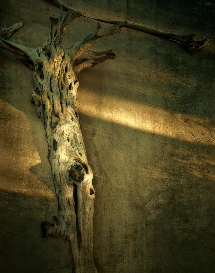 Old Tree In Sand Photograph  - Old Tree In Sand Fine Art Print