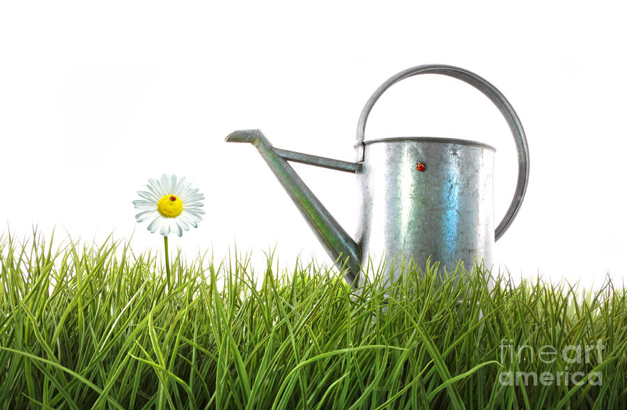 Old Watering Can In Grass With White Photograph