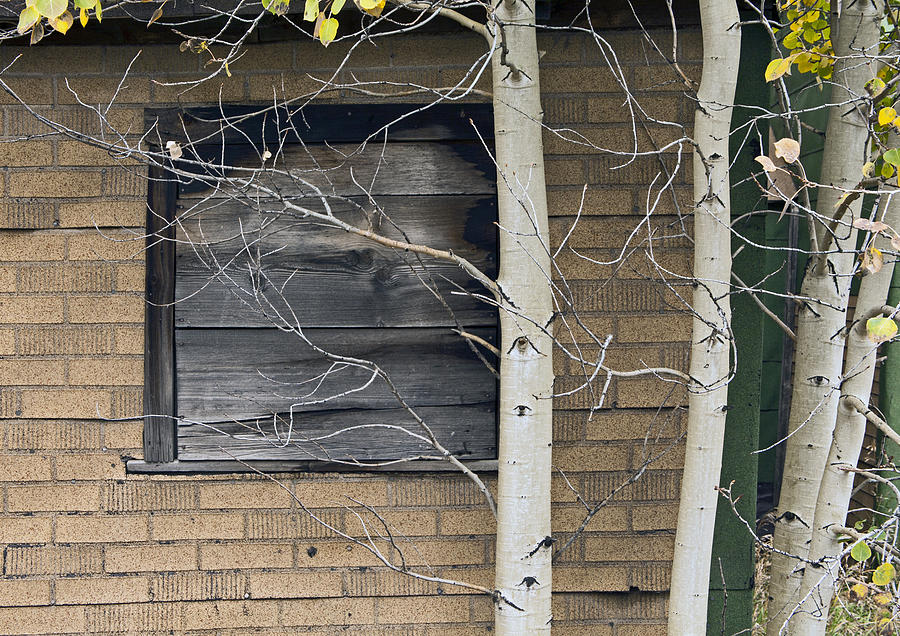 Old Window And Aspen Photograph  - Old Window And Aspen Fine Art Print