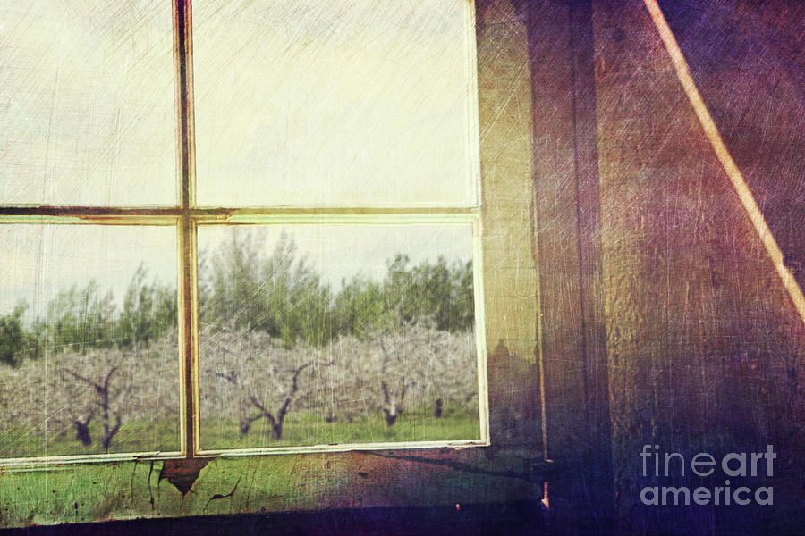 Old Window Looking Out To Apple Orchard Photograph