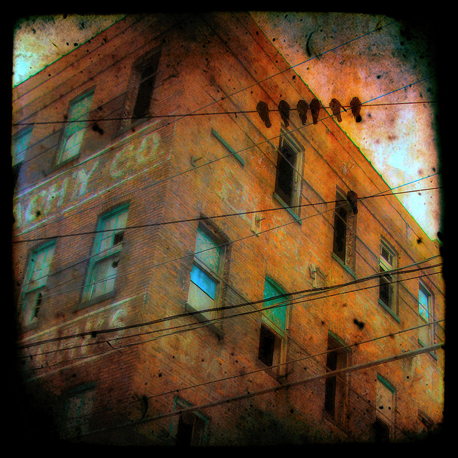 Old Wires Photograph  - Old Wires Fine Art Print