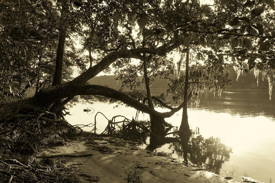 Ole Suwannee River Photograph