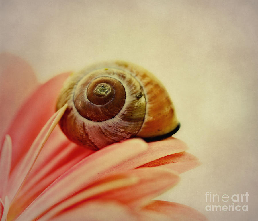 On A Flower Photograph  - On A Flower Fine Art Print