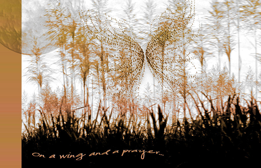 On A Wing And A Prayer Photograph  - On A Wing And A Prayer Fine Art Print