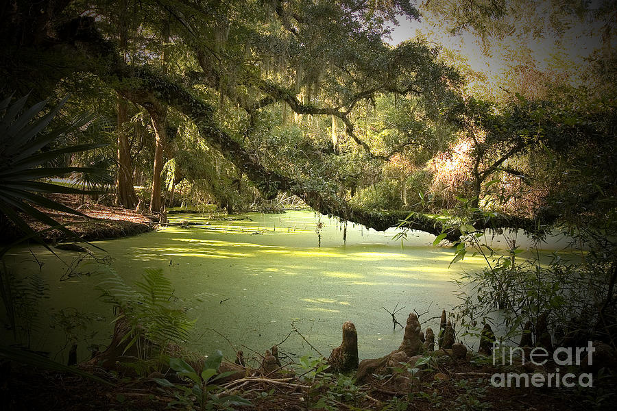 On Swamps Edge Photograph  - On Swamps Edge Fine Art Print