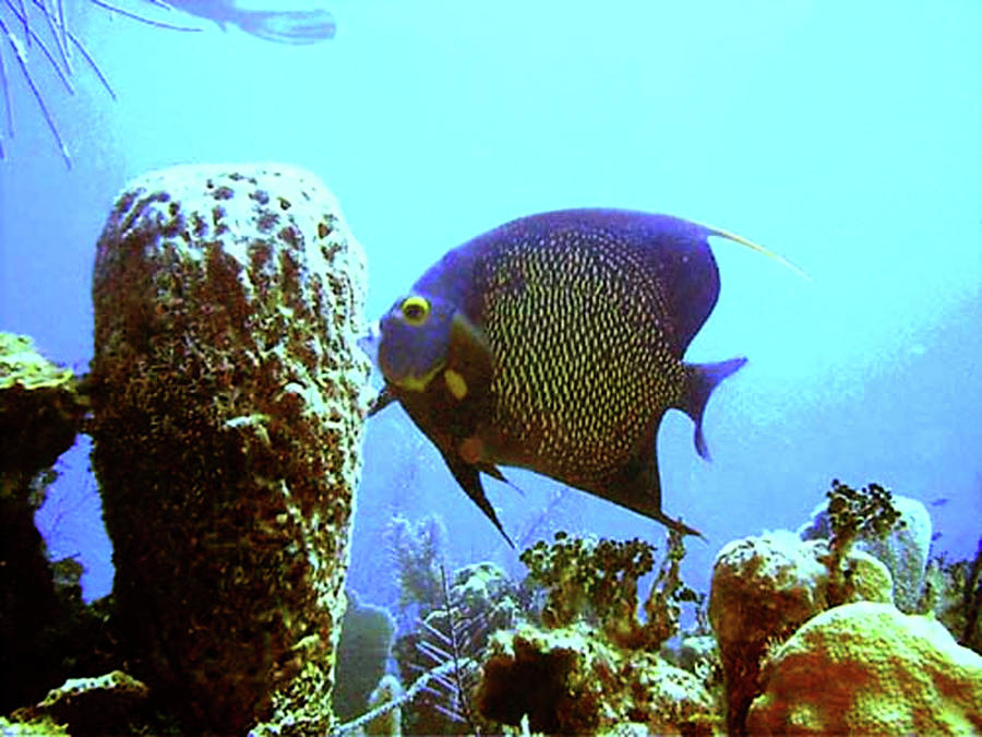 On The Reef Photograph  - On The Reef Fine Art Print