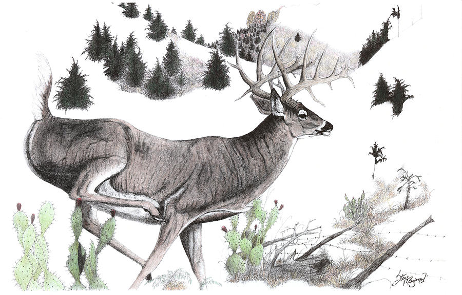 HCW image 1024 1024x1024 together with  likewise Deer Coloring Page further white tailed deer also 0492663d24d4b8202c498346ca0b1860 moreover 7 point buck 133113403 furthermore  in addition how to draw a deer head  buck  dear head also tenpointbuck furthermore  together with . on monster coloring pages bucks deer