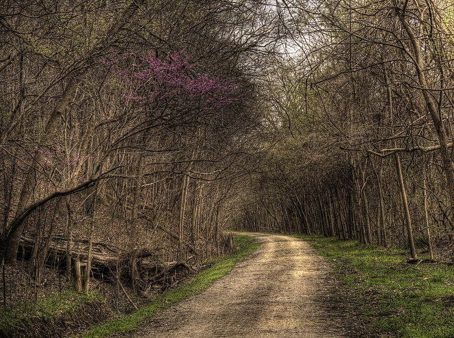 Katy Trail Photograph - On This Trail by William Fields