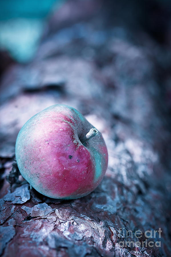 Apple Photograph - One Appel A Day by VIAINA Visual Artist