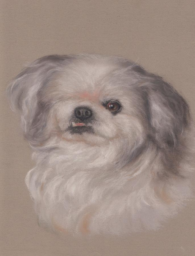 One-eyed Bandit In Pastels  Pastel