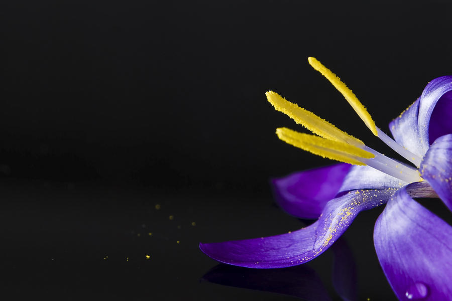 One Flower Photograph