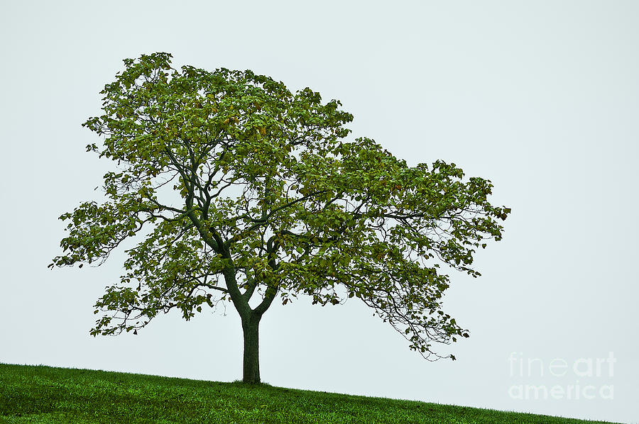Muted Photograph - One Tree Hill. by John Greim