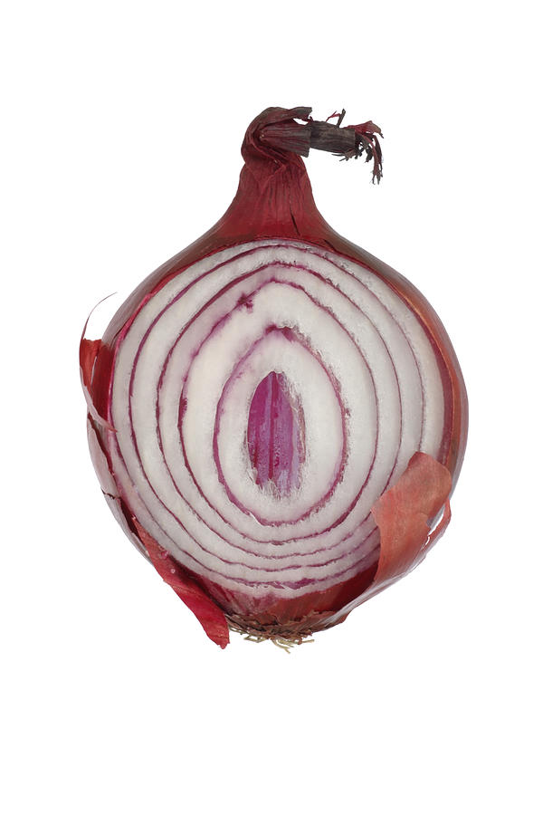 Onion Photograph  - Onion Fine Art Print