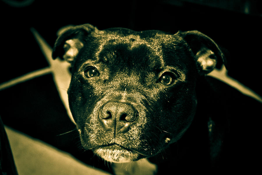 Dog Photograph - Onyx by Robby Green
