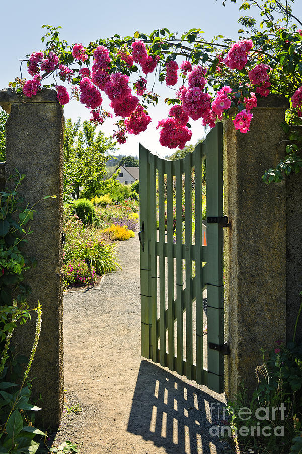 Open Garden Gate With Roses Photograph  - Open Garden Gate With Roses Fine Art Print