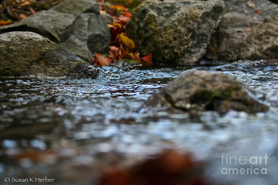 Outdoors Photograph - Opposite Shore by Susan Herber