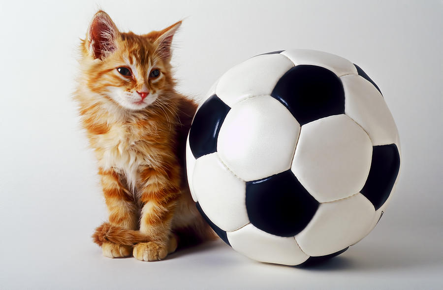 Orange And White Kitten With Soccor Ball Photograph
