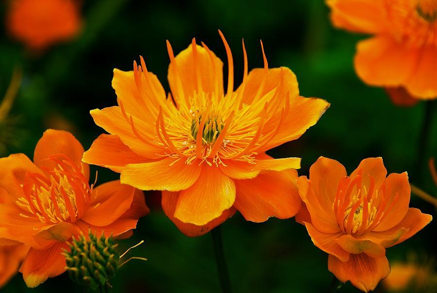 Orange And Yellow Photograph