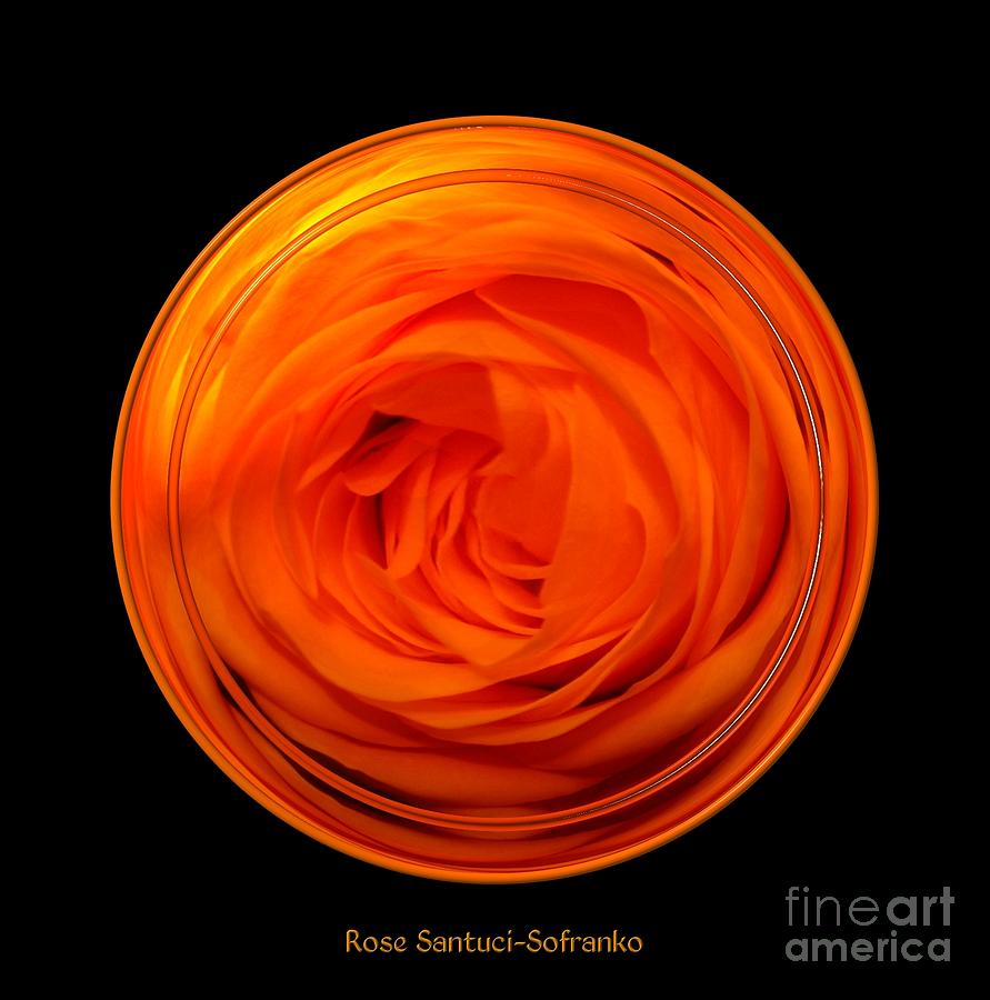 Orange apricot rose under glass photograph by rose santuci for Rose under glass