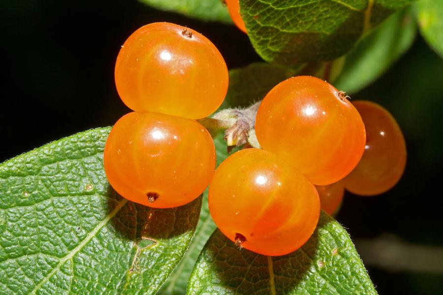 Orange-Flower Pavlovas With Strawberries Recipe — Dishmaps